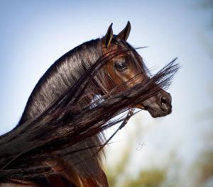 Zeig Mir Bilder Von Pferden Für Whatsapp 300x264 - Zeig Mir Bilder Von Pferden Für Whatsapp
