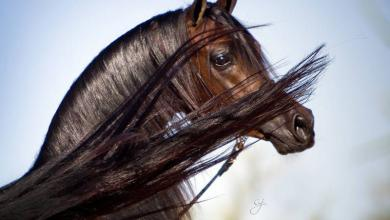 Zeig Mir Bilder Von Pferden Für Whatsapp 390x220 - Zeig Mir Bilder Von Pferden Für Whatsapp