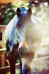 Zeig Mir Pferde Bilder Für Facebook 200x300 - Zeig Mir Pferde Bilder Für Facebook