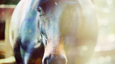 Zeig Mir Pferde Bilder Für Facebook 390x220 - Zeig Mir Pferde Bilder Für Facebook