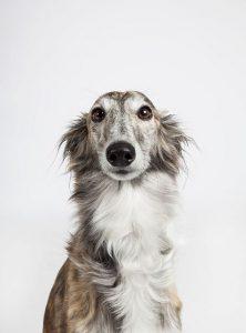 bersicht Hunderassen 222x300 - Übersicht Hunderassen
