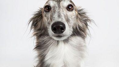 bersicht Hunderassen 390x220 - Übersicht Hunderassen