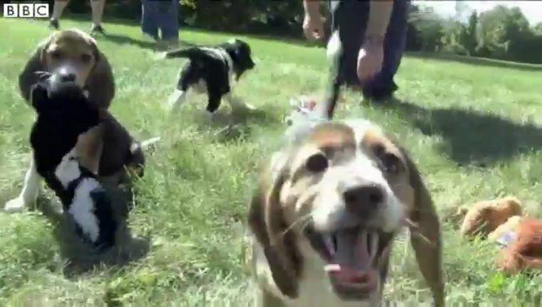 Übersicht Hunderassen Mit Bild - Übersicht Hunderassen Mit Bild