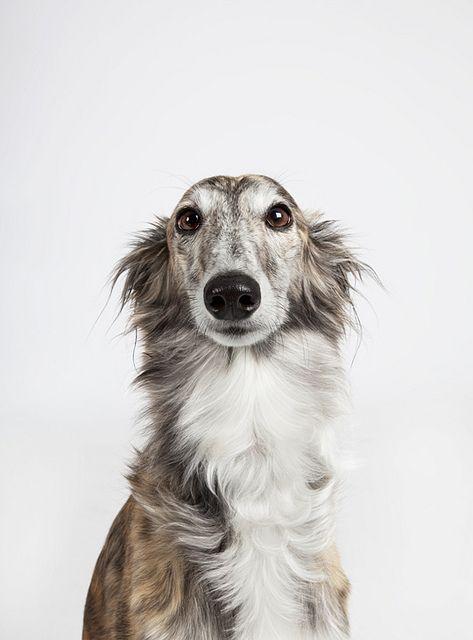 Übersicht Hunderassen - Übersicht Hunderassen