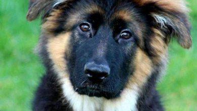 Alle Hunde Bilder Für Facebook 390x220 - Alle Hunde Bilder Für Facebook