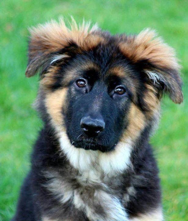 Alle Hunde Bilder Für Facebook - Alle Hunde Bilder Für Facebook