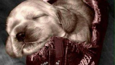 Alle Hunde Bilder Kostenlos Herunterladen 390x220 - Alle Hunde Bilder Kostenlos Herunterladen