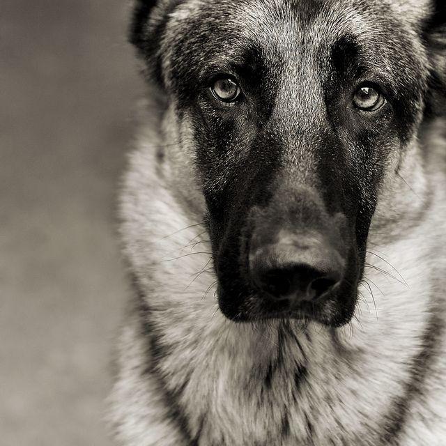 Alle Hunde Der Welt - Alle Hunde Der Welt