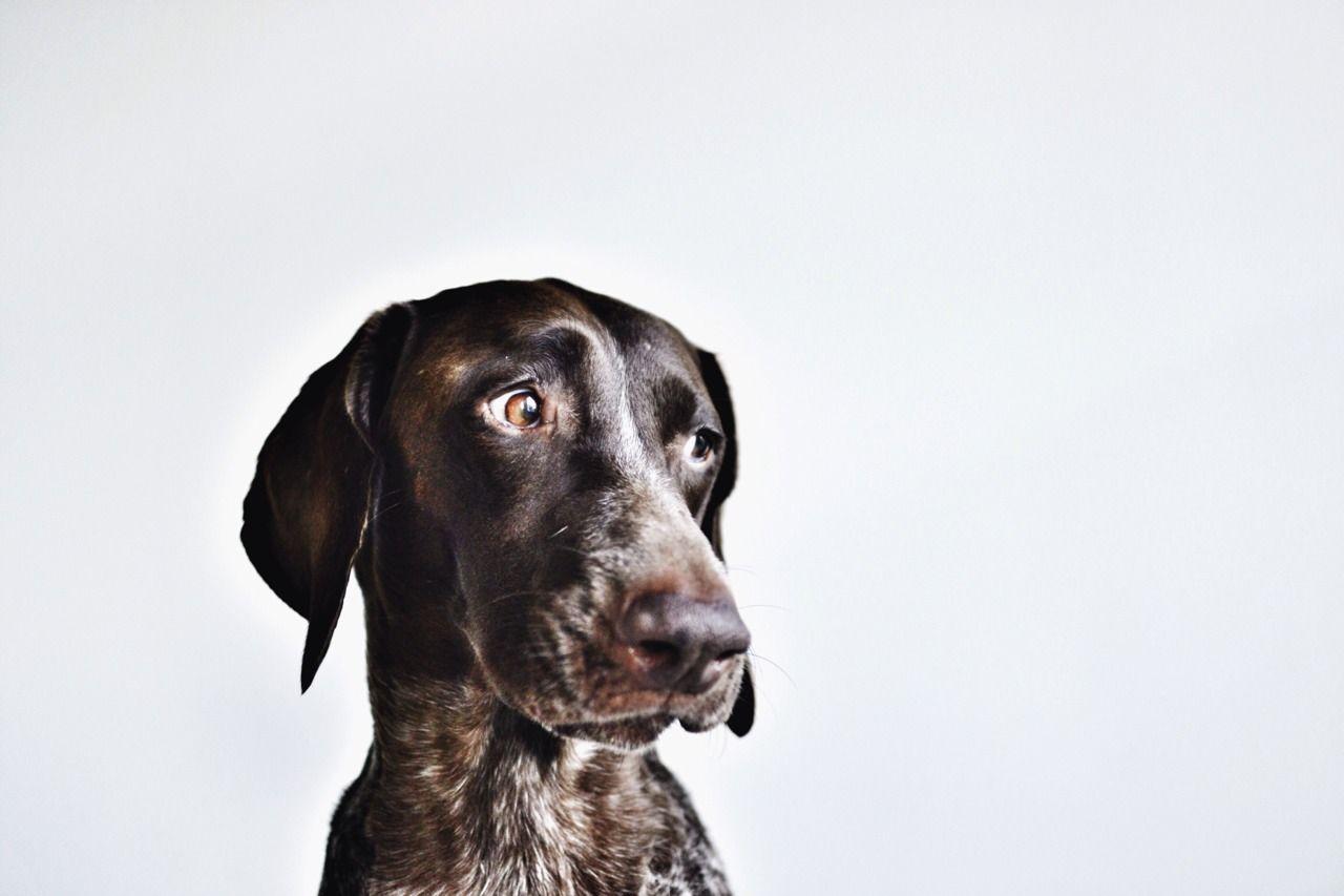Alle Hunderassen Auf Der Welt - Alle Hunderassen Auf Der Welt