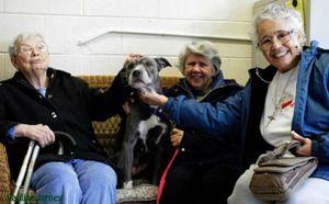 Alle Hunderassen Bilder Für Facebook - Alle Hunderassen Bilder Für Facebook