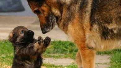 Alle Hunderassen Bilder Für Whatsapp 390x220 - Alle Hunderassen Bilder Für Whatsapp