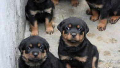 Alle Hunderassen Der Welt Mit Bild 390x220 - Alle Hunderassen Der Welt Mit Bild