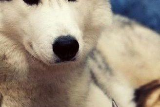 Alle Hunderassen Der Welt Mit Bild Und Namen 328x220 - Alle Hunderassen Der Welt Mit Bild Und Namen