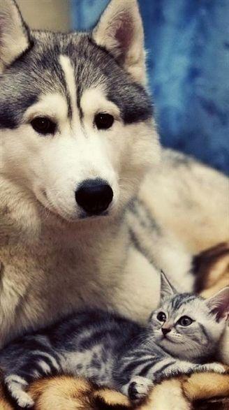 Alle Hunderassen Der Welt Mit Bild Und Namen - Alle Hunderassen Der Welt Mit Bild Und Namen