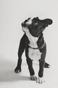 Alle Hunderassen Mit Bild 200x300 - Alle Hunderassen Mit Bild
