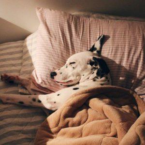 Alle Hunderassen Mit Bild Im Überblick 300x300 - Alle Hunderassen Mit Bild Im Überblick