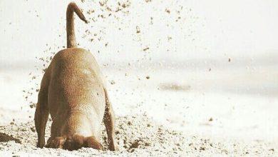 Alle Hunderassen Mit Bild Und Beschreibung 390x220 - Alle Hunderassen Mit Bild Und Beschreibung
