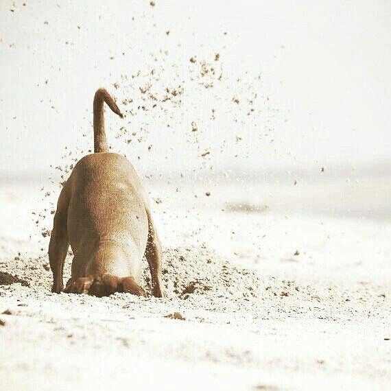 Alle Hunderassen Mit Bild Und Beschreibung - Alle Hunderassen Mit Bild Und Beschreibung