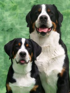 Alle Hunderassen Mit Bild Und Name 227x300 - Alle Hunderassen Mit Bild Und Name