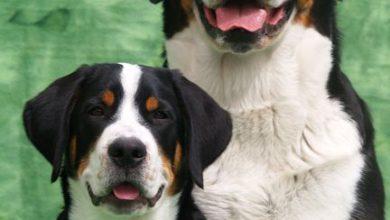 Alle Hunderassen Mit Bild Und Name 390x220 - Alle Hunderassen Mit Bild Und Name