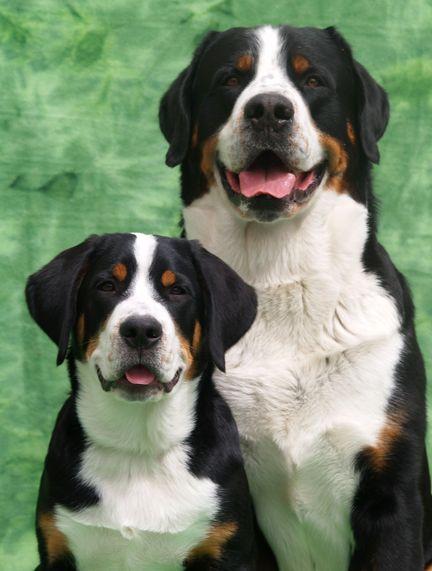 Alle Hunderassen Mit Bild Und Name - Alle Hunderassen Mit Bild Und Name