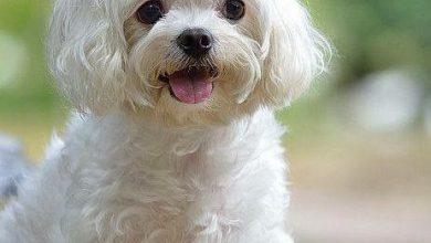 Alle Hunderassen Mit Bilder Für Facebook 390x220 - Alle Hunderassen Mit Bilder Für Facebook