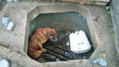 Alle Hunderassen Mit Bilder Kostenlos 390x220 - Alle Hunderassen Mit Bilder Kostenlos