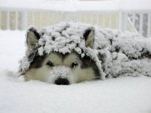 Alle Hunderassen Mit Bilder Kostenlos Herunterladen 300x225 - Alle Hunderassen Mit Bilder Kostenlos Herunterladen