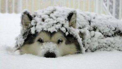 Alle Hunderassen Mit Bilder Kostenlos Herunterladen 390x220 - Alle Hunderassen Mit Bilder Kostenlos Herunterladen