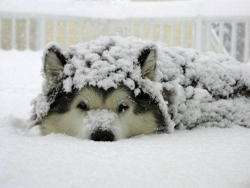Alle Hunderassen Mit Bilder Kostenlos Herunterladen - Alle Hunderassen Mit Bilder Kostenlos Herunterladen