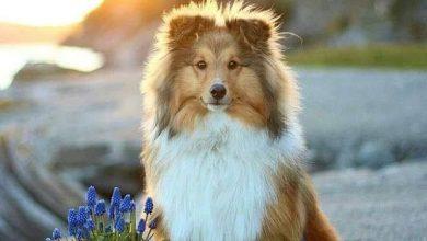 Alle Hunderassen Mit Foto 390x220 - Alle Hunderassen Mit Foto