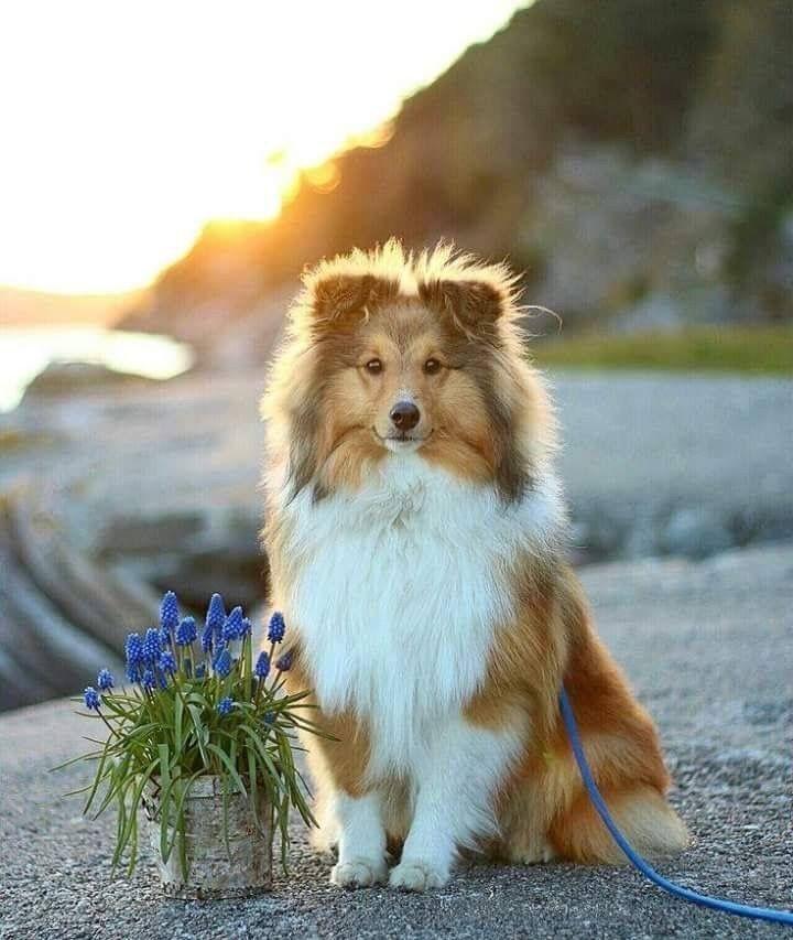Alle Hunderassen Mit Foto - Alle Hunderassen Mit Foto