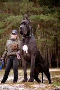 Alles Über Hunde 200x300 - Alles Über Hunde