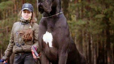 Alles Über Hunde 390x220 - Alles Über Hunde