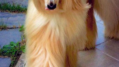 Alles Über Hunderassen 390x220 - Alles Über Hunderassen