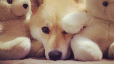 Alles Für Kleine Hunde 390x220 - Alles Für Kleine Hunde