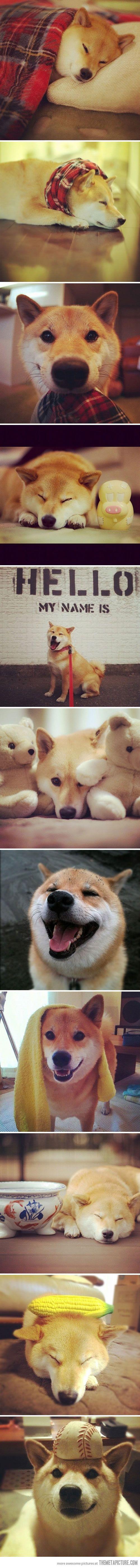 Alles Für Kleine Hunde - Alles Für Kleine Hunde