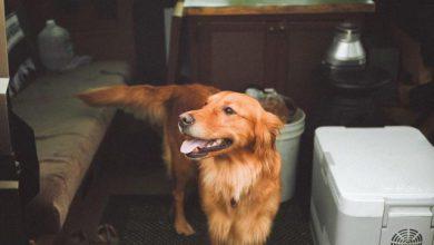 Alter Hund 390x220 - Alter Hund