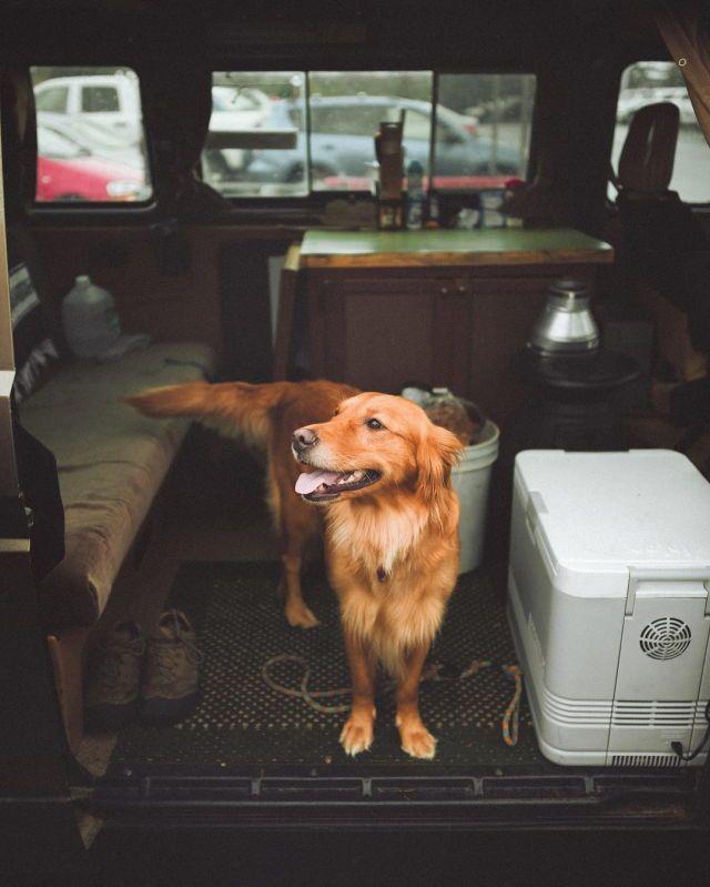 Alter Hund - Alter Hund