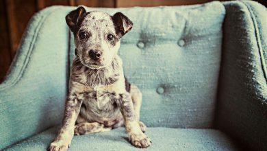 Asiatische Hunderassen Mit Bild 390x220 - Asiatische Hunderassen Mit Bild