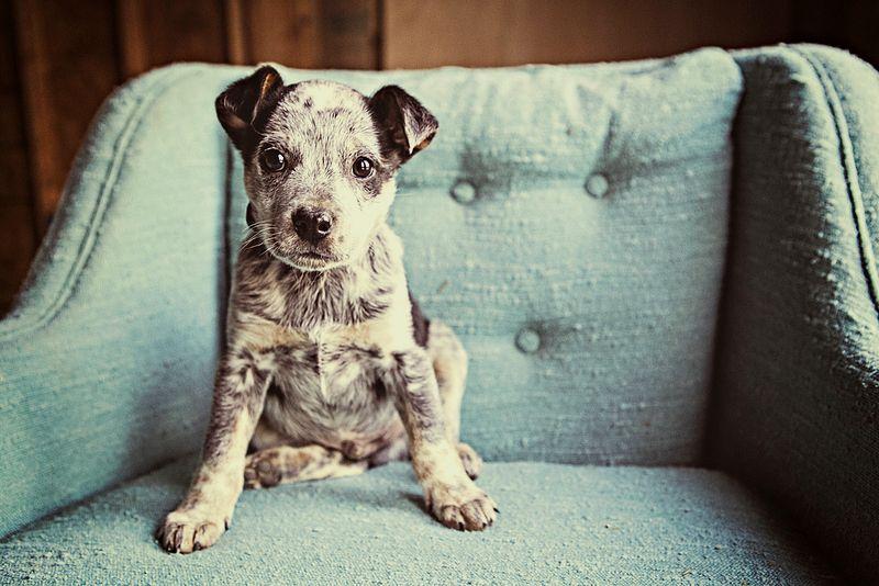 Asiatische Hunderassen Mit Bild - Asiatische Hunderassen Mit Bild