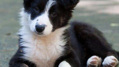 Ausländische Hunderassen 390x220 - Ausländische Hunderassen