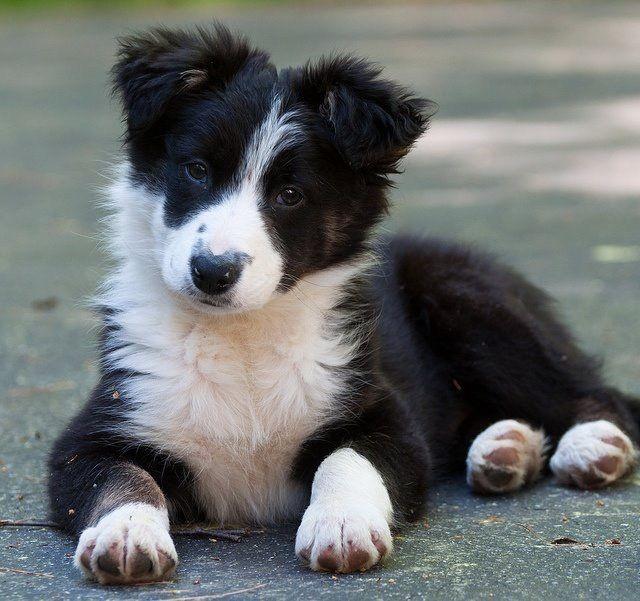 Ausländische Hunderassen - Ausländische Hunderassen