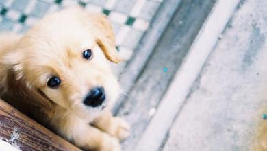 Bekannte Hunderassen 390x220 - Bekannte Hunderassen