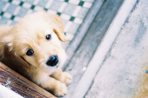 Bekannte Hunderassen - Bekannte Hunderassen