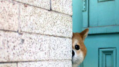 Beliebte Hunderassen Mit Bild 390x220 - Beliebte Hunderassen Mit Bild