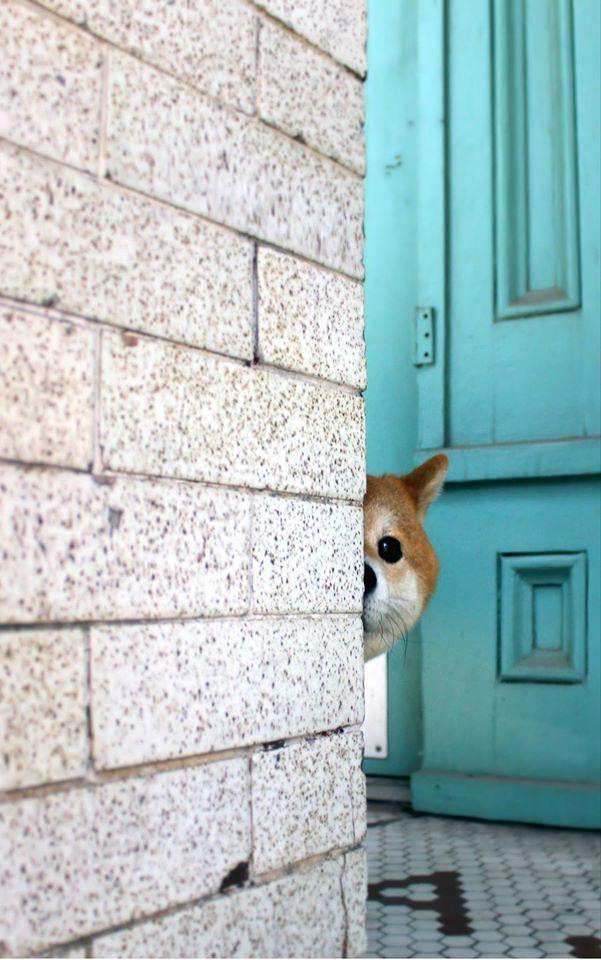 Beliebte Hunderassen Mit Bild - Beliebte Hunderassen Mit Bild