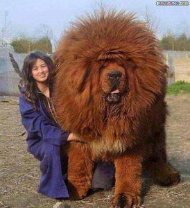 Beliebte Hunderassen Mittelgroß 274x300 - Beliebte Hunderassen Mittelgroß