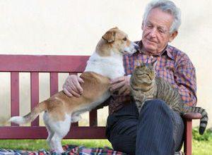 Beliebteste Hunderassen Mit Bild 300x220 - Beliebteste Hunderassen Mit Bild