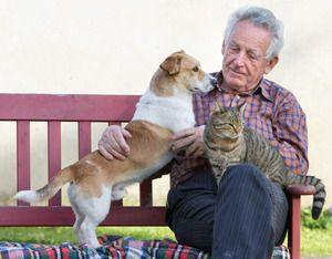 Beliebteste Hunderassen Mit Bild 300x234 - Beliebteste Hunderassen Mit Bild